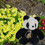 PandaWear