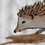 knittinghedgehog