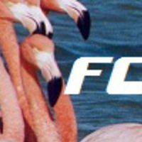 flamingocoast