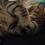 deathkat