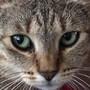 catnmouss