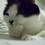 kittenkatt